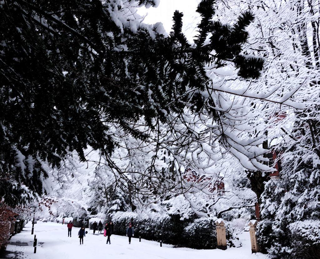 DPP Snow on the Park